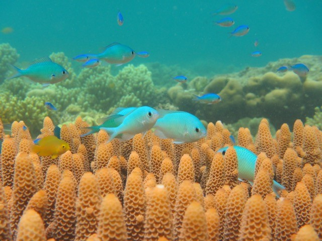 Fishes, Lizard Island